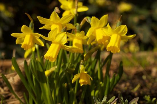 Spring N8